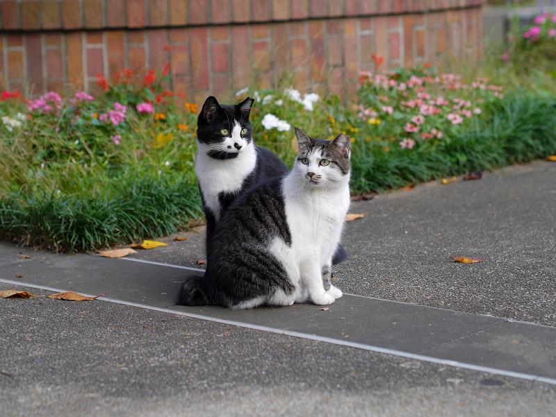 公園の猫2匹3