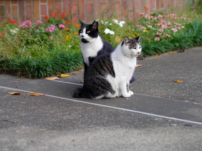 公園の猫2匹4