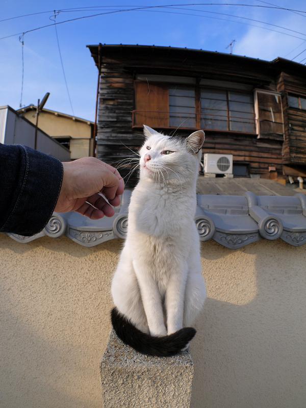 墓苑壁と白黒猫1