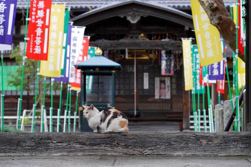 門の横木と薄三毛猫1