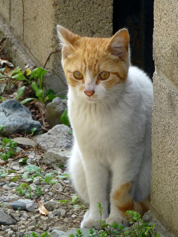 茶白猫のアップ