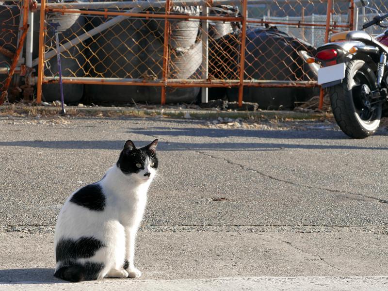 道路の白黒猫1