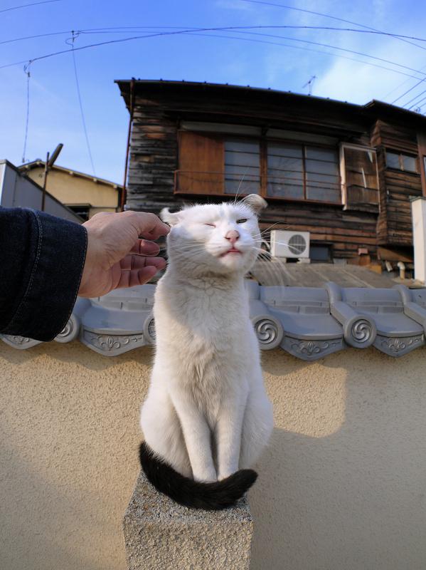 墓苑壁と白黒猫2