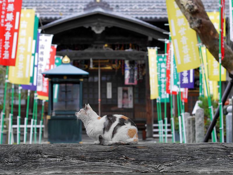 門の横木と薄三毛猫2