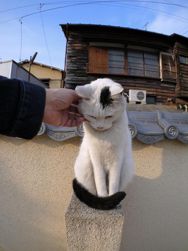 墓苑壁と白黒猫3