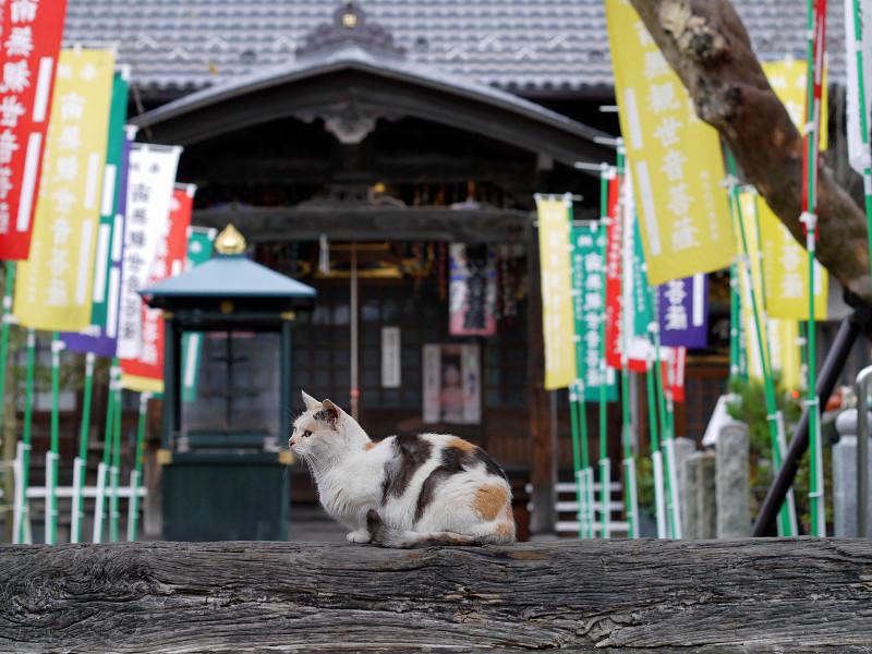 門の横木と薄三毛猫3