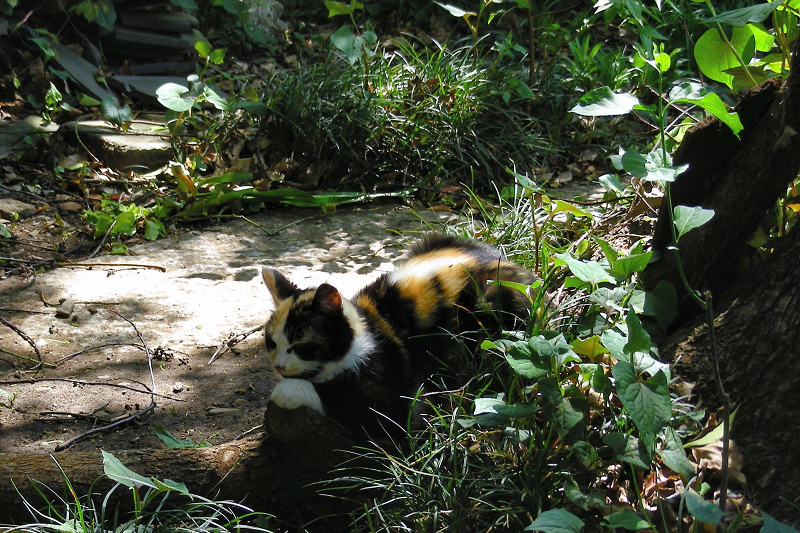 草むらと三毛仔猫1