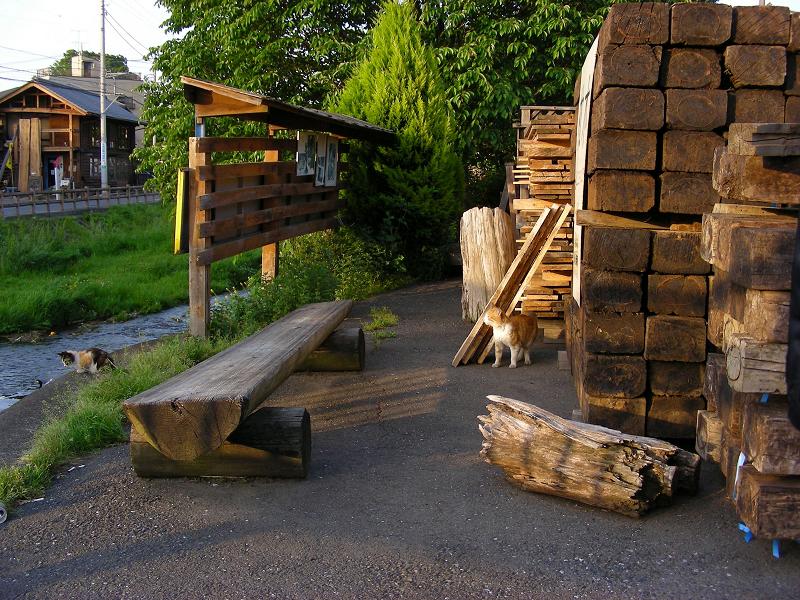 木材置き場の猫たち1
