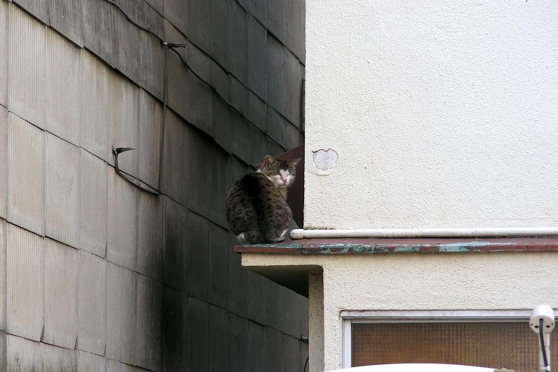 屋根の庇とキジ白猫1
