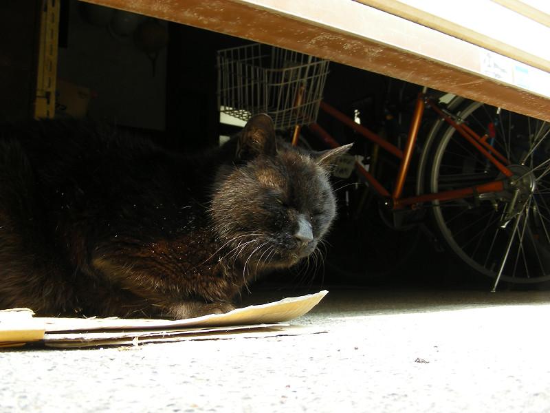 ガレージの黒猫1