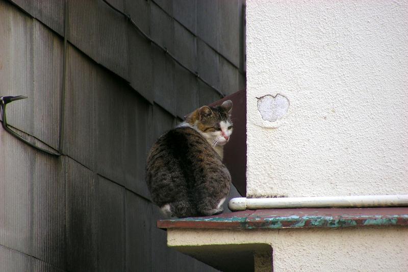 屋根の庇とキジ白猫2