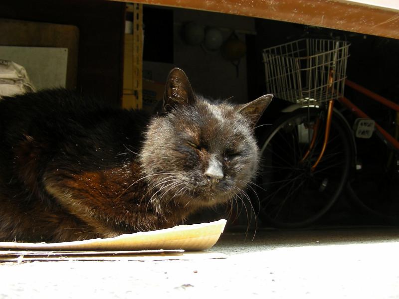 ガレージの黒猫2