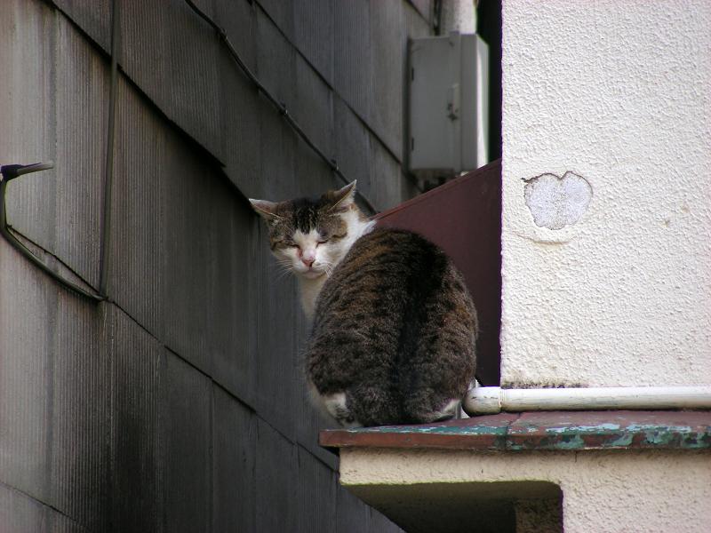 屋根の庇とキジ白猫3