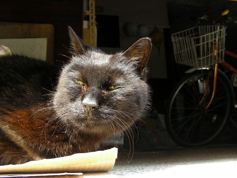 ガレージの黒猫3