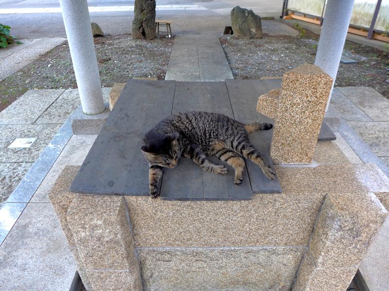 井戸の蓋の上で寝ているキジトラ猫1