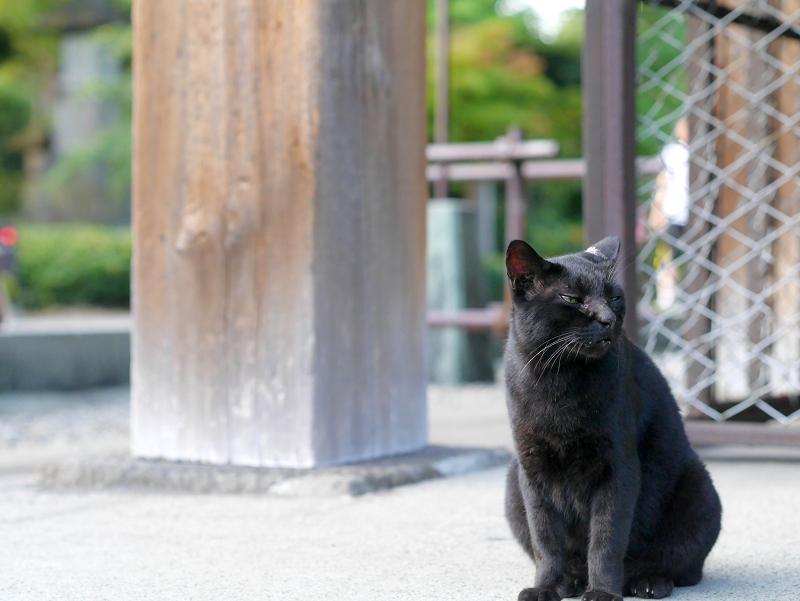 お堂犬走りと黒猫1