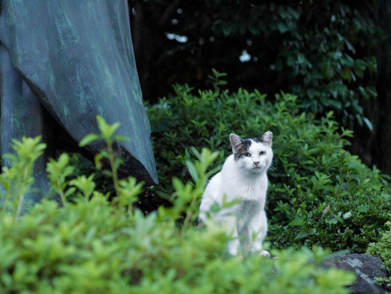 銅像と白キジ猫1