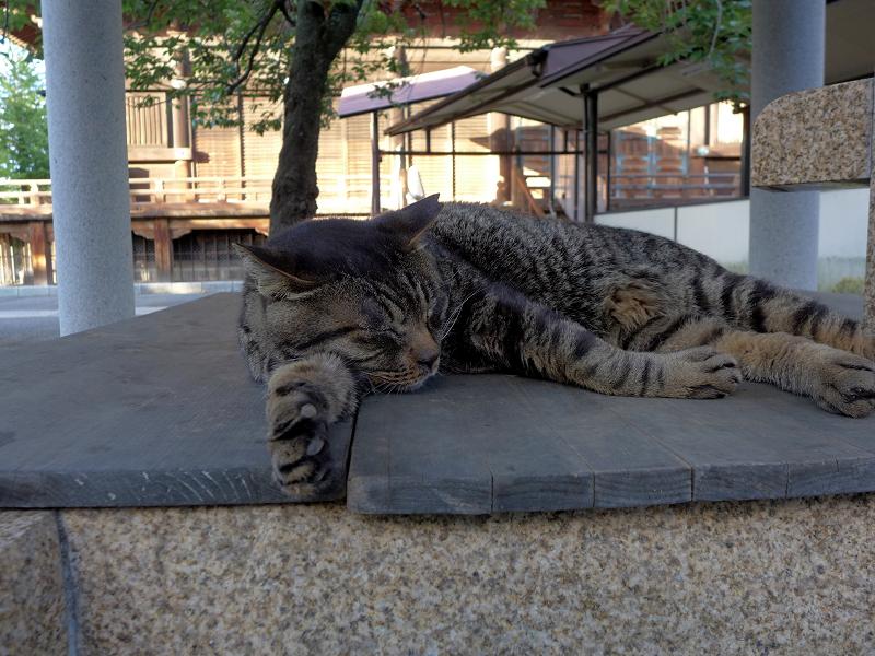 井戸の蓋の上で寝ているキジトラ猫2