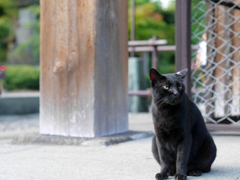 お堂犬走りと黒猫2