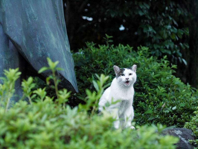 銅像と白キジ猫2
