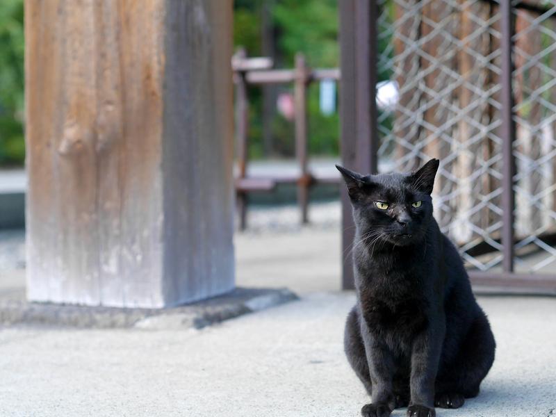 お堂犬走りと黒猫3