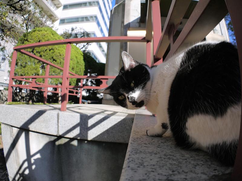 白黒猫を前後と上から1