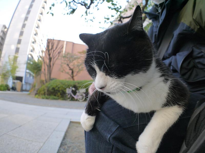 膝に乗ってる黒白猫2