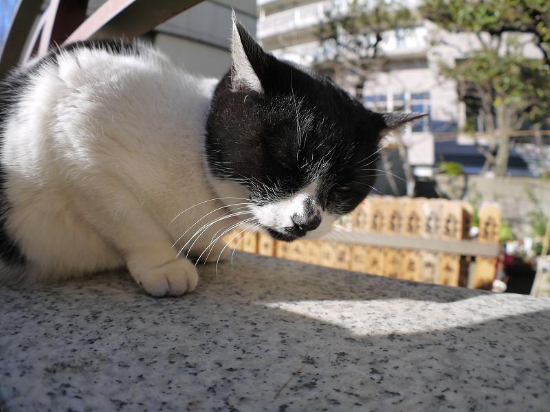 白黒猫を前後と上から2