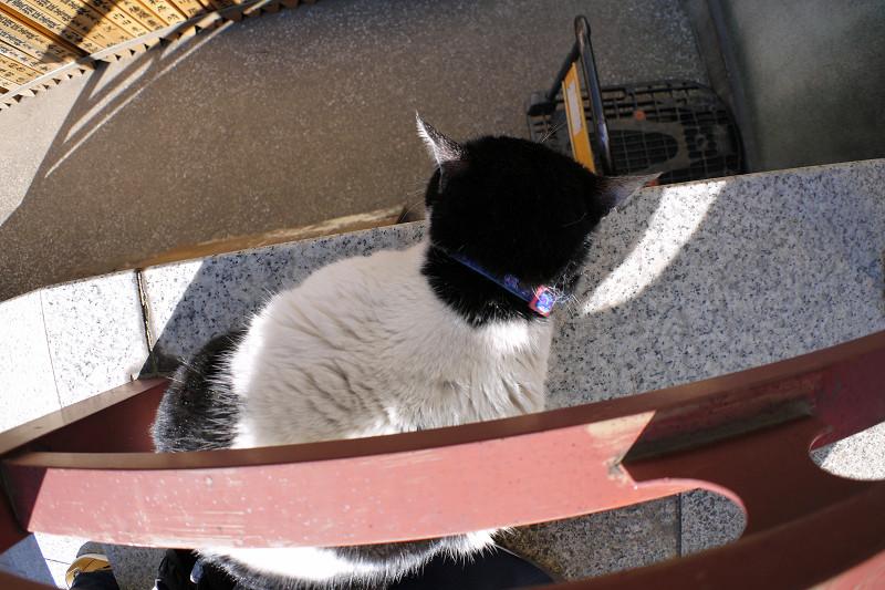 白黒猫を前後と上から3