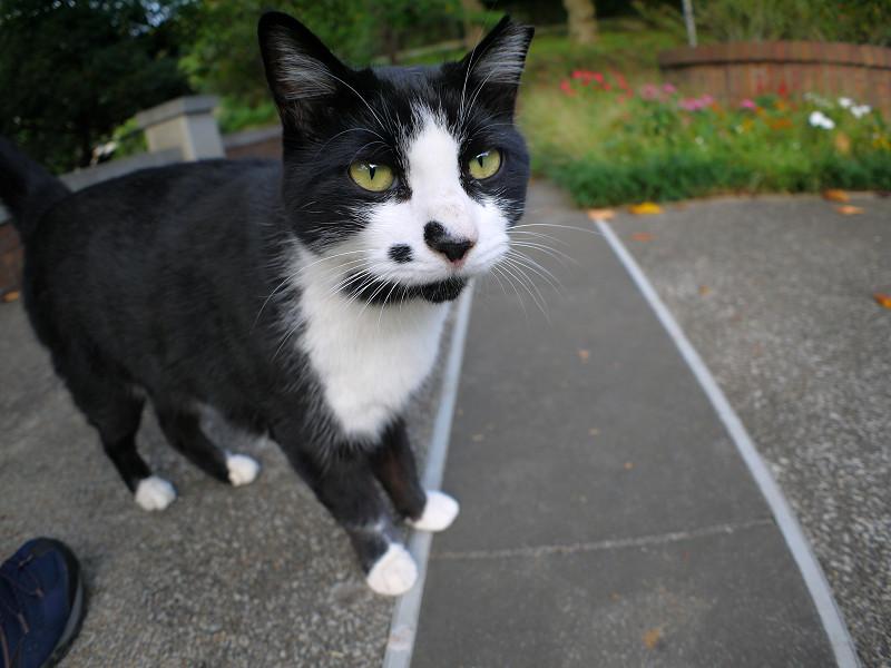 公園の黒白猫広角2