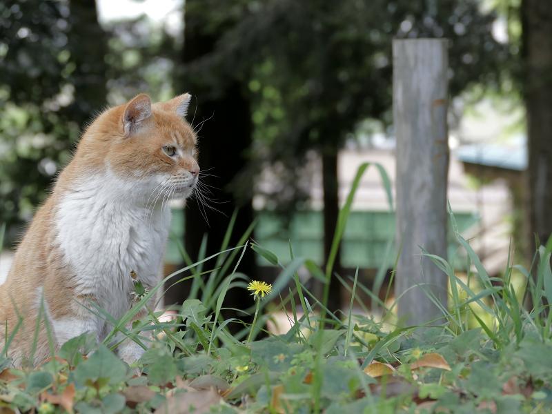 草むらの茶白猫2
