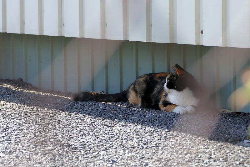 隙間と三毛猫1