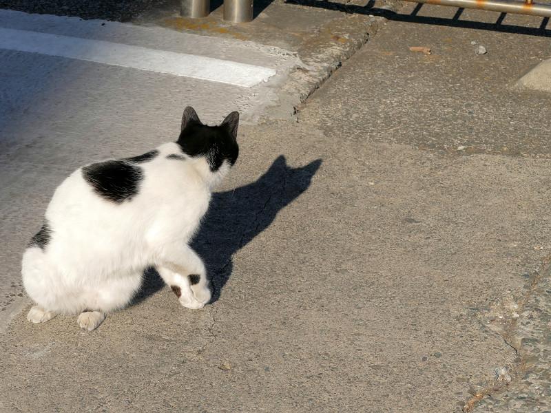 何かを見つけたらしい白黒猫1