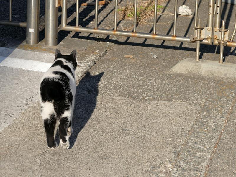 何かを見つけたらしい白黒猫3