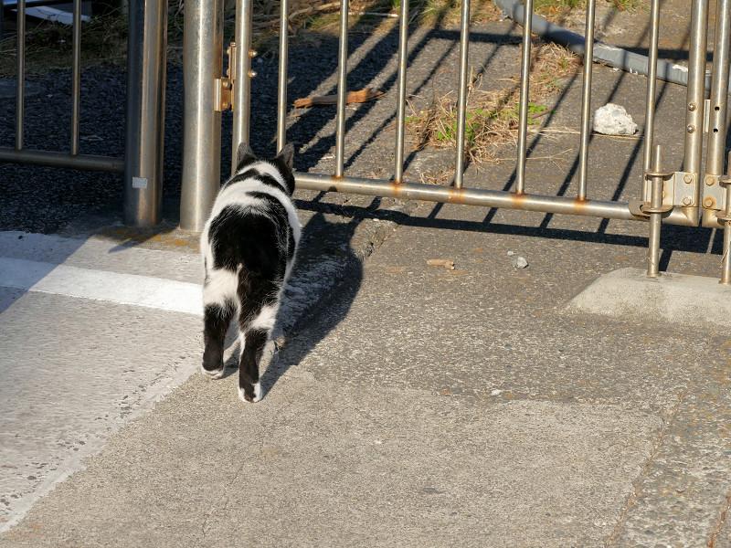 何かを見つけたらしい白黒猫4