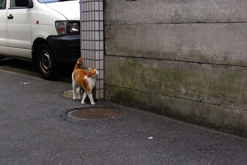 路地を歩く茶白猫1