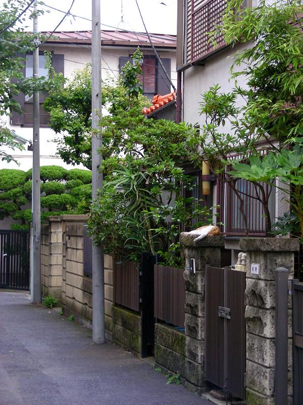 門柱で寝ている茶白猫1