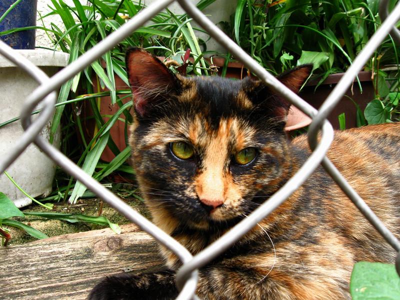 金網とサビ柄猫