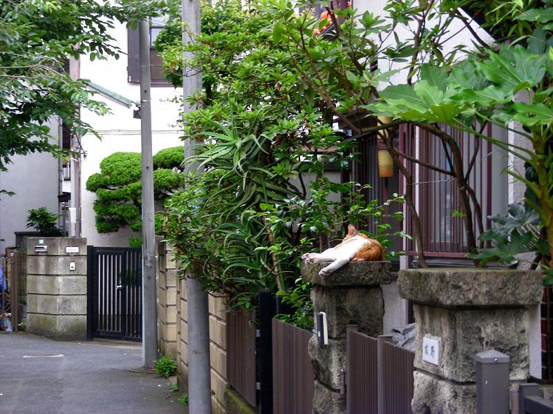 門柱で寝ている茶白猫2