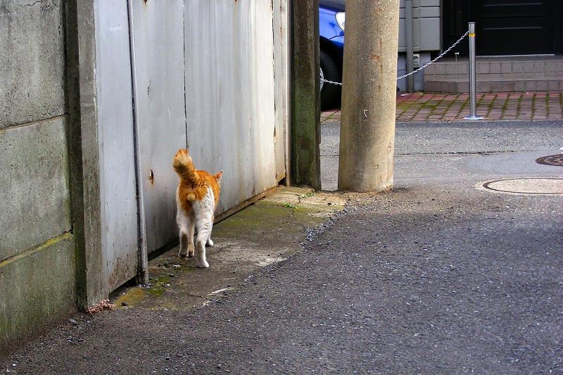 路地を歩く茶白猫3