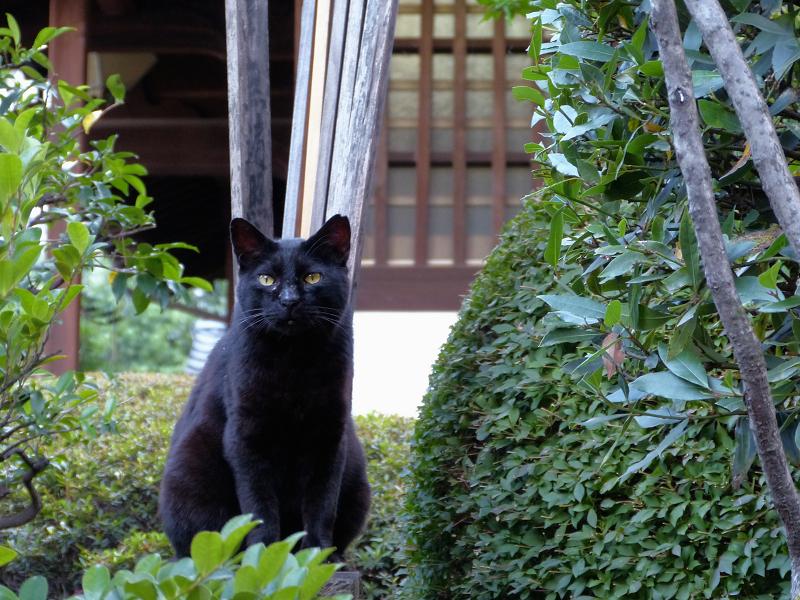 卒塔婆と黒猫1