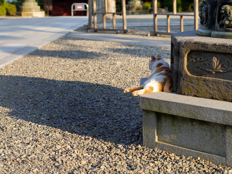 灯籠台座の白茶猫1