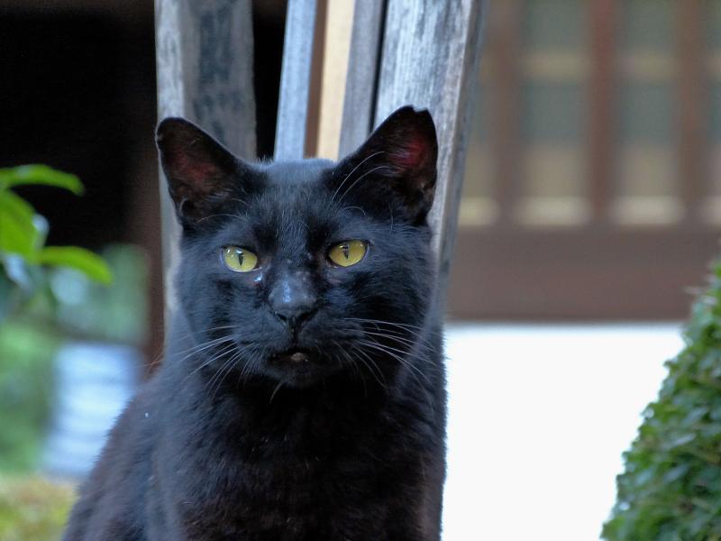 卒塔婆と黒猫2