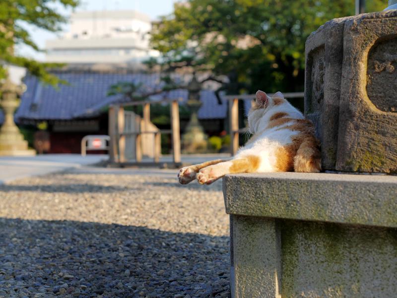 灯籠台座の白茶猫2