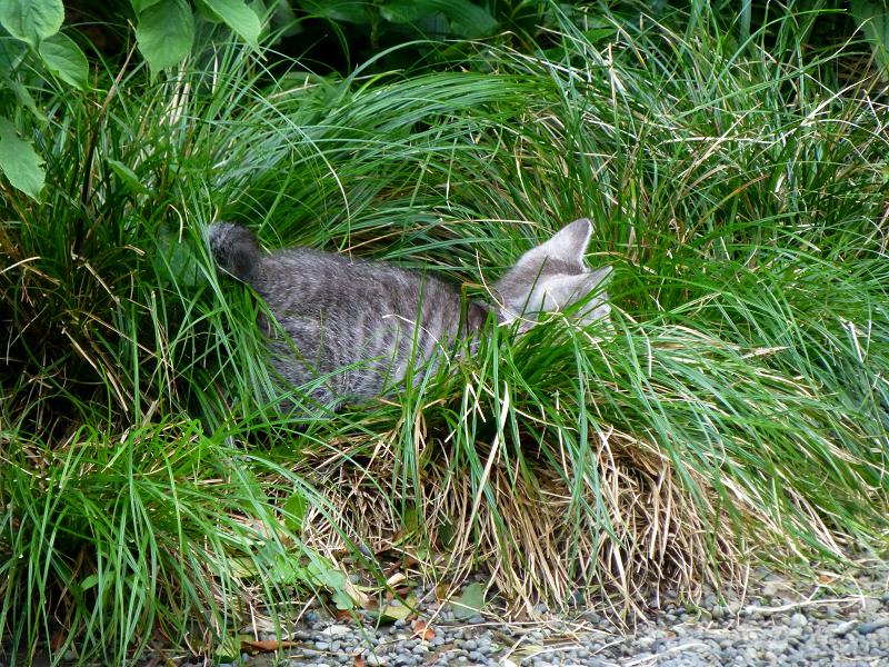 草むらに仔猫1