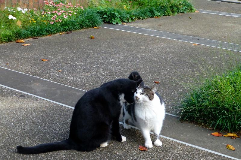 公園の仲良し猫たち
