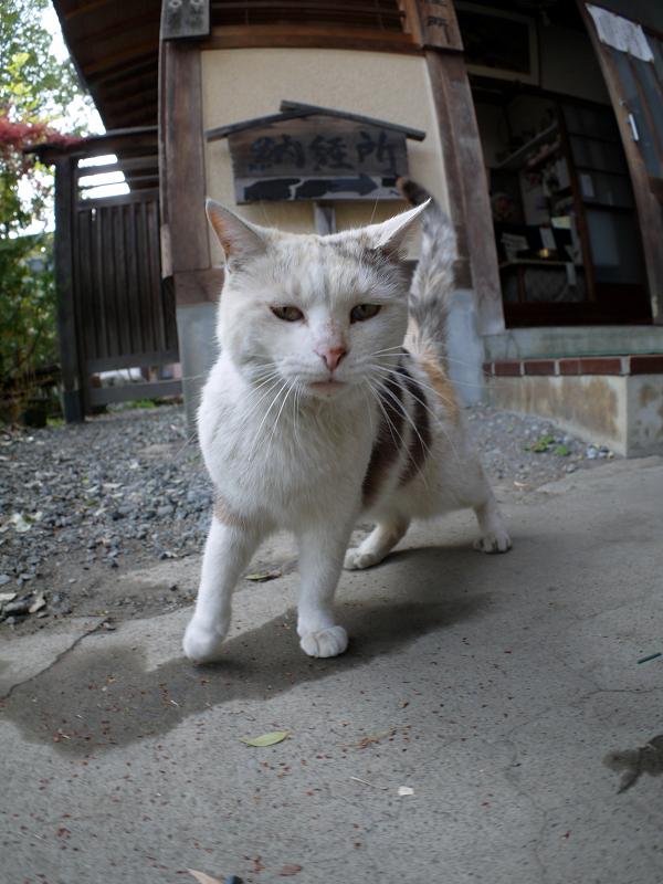境内と薄三毛猫1