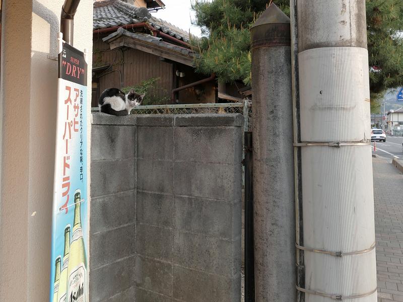 木製の塀と黒白猫1