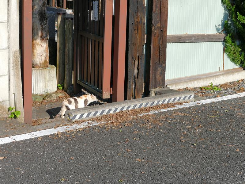 去って行く三毛猫1