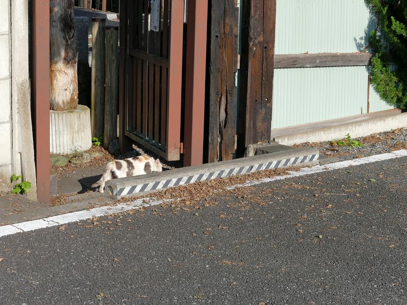 去って行く三毛猫2